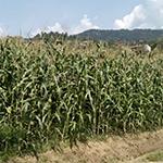 tondo_miniatura_coltivazioni